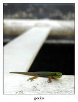 gecko by xanadian