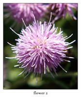 flower 2 by xanadian