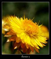 flower 3 by xanadian