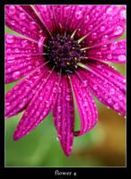 flower 4 by xanadian