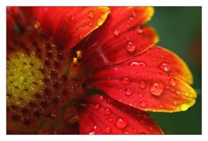 flower 8 by xanadian