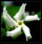 flower 9 by xanadian