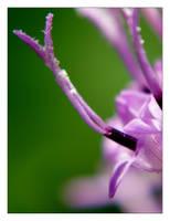 flower 10 by xanadian