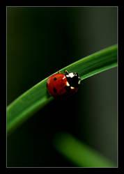 ladybug by xanadian