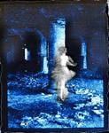 .: cloud dancer :. by webgod1