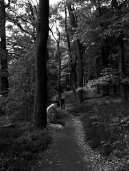 Forrest of Sorrow by shadow-one27