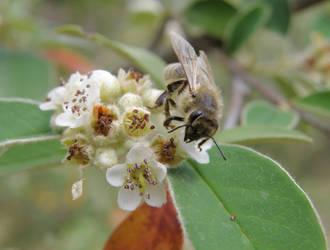 Bee-Jou