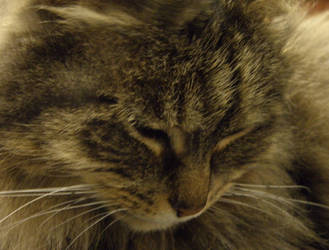 Cleo's Closeup