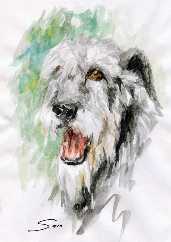 Irish Wolfhound by Kuroi-kisin