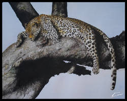 Panthera pardus by Kuroi-kisin