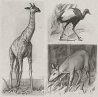 Sketches2 by Kuroi-kisin