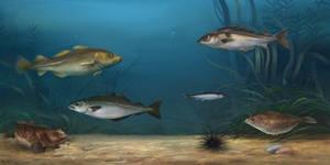 Illustration: fishes by Kuroi-kisin