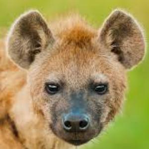 HyenaHeartArt's Profile Picture