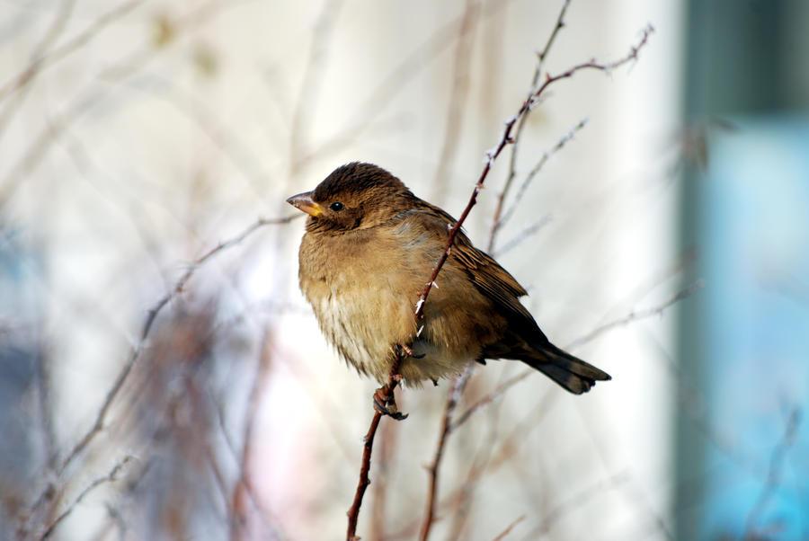 Lil' birdie by silvestru