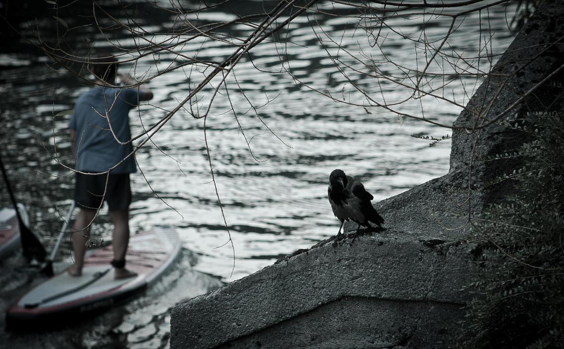 Crow in Ljubljana by HOMER65
