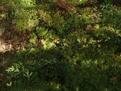 Oergon Woodland
