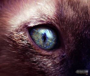 Calypso - Eye of the Beast by ONE-Photographie