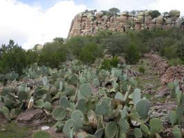 cactus, Mexico by Busta09