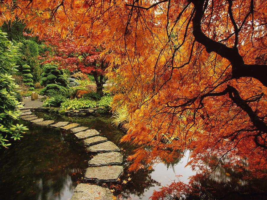 Very beautiful Garden by patientX-code--93 on DeviantArt