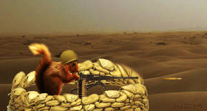 Squirrel Army 1/2