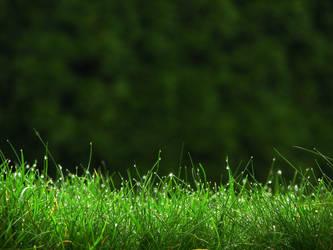 Grass by yethzart