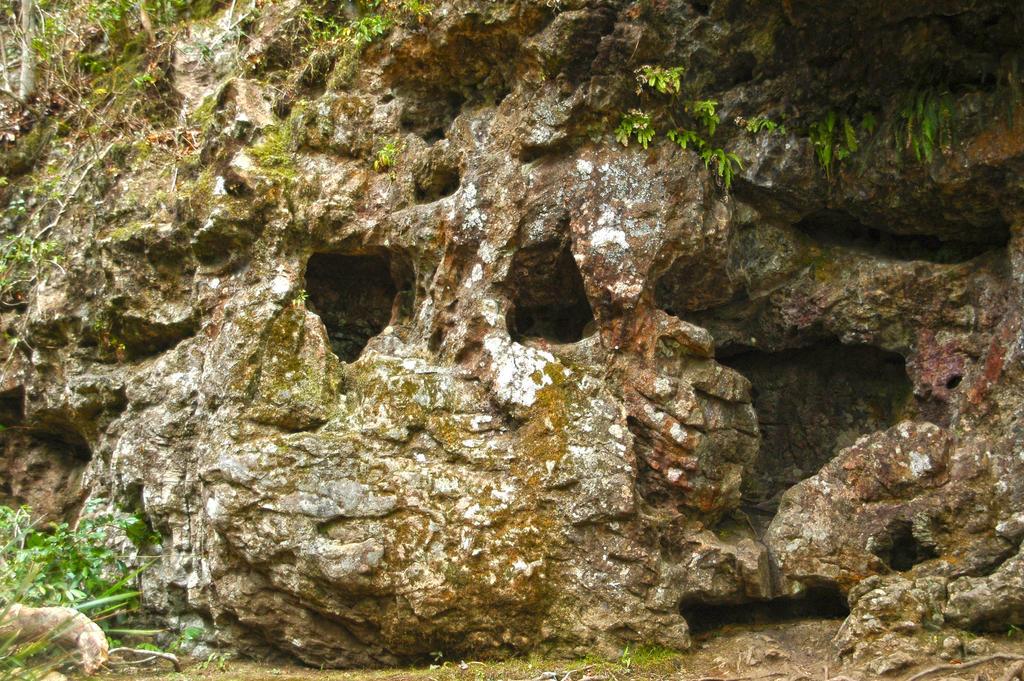 2014-kondalilla-rock-wall-3 by tbg-stock-images