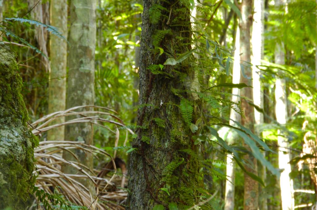2014-kondalilla-tree-ferns by tbg-stock-images
