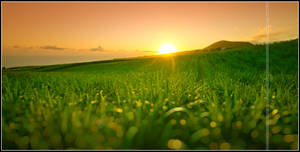 Sunset on sugar cane by songe