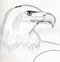 my bald eagle by lassegorm