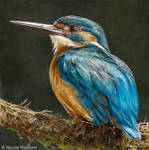 Kingfisher (drawing)