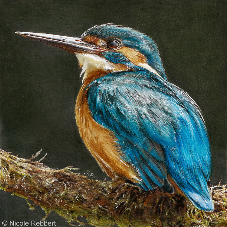 750 x 752 jpeg 374kBCommonkingfisher
