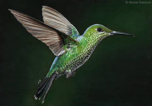 Hummingbird (drawing)