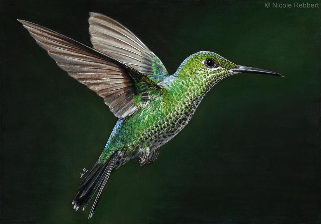 Hummingbird (drawing) by Quelchii