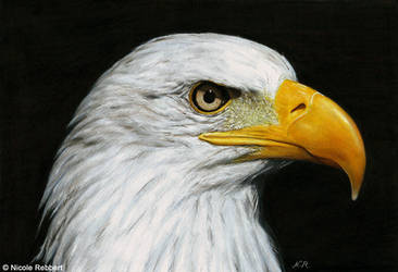 Eagle drawing by Quelchii