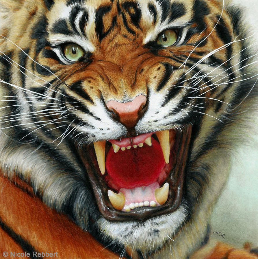 Tiger: Tiger (drawing) By Quelchii On DeviantArt