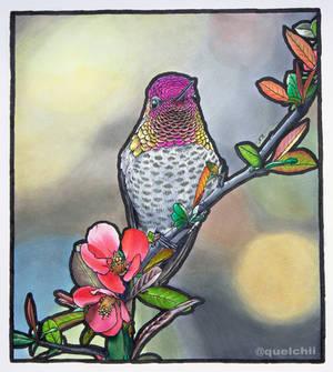 Hummingbird marker drawing