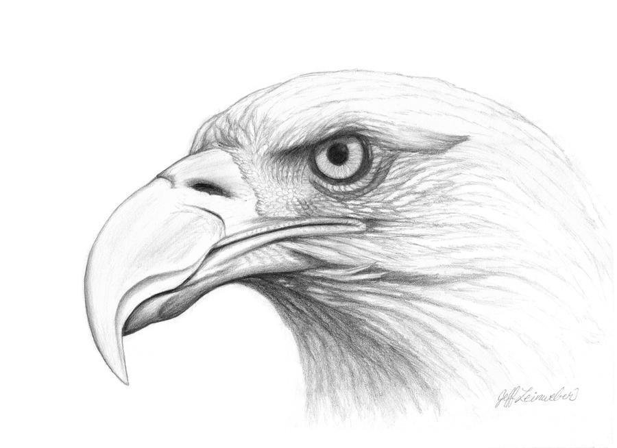 Bald Eagle Head Drawings  Eagle Head Pencil Drawing Easy