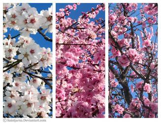 Spring is Here III by saintjarna