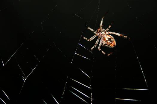 ze Spider