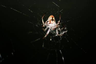 ze Spider 2