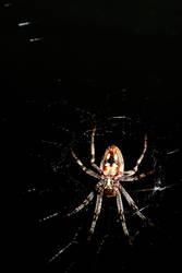 ze Spider 3