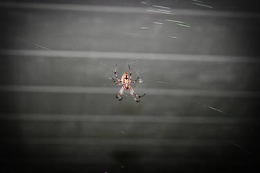 ze Spider 4