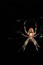 ze Spider 5