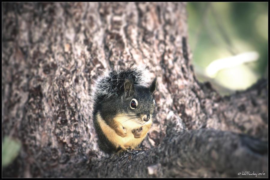 Woodland Squirrel by lil-Mickey