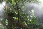 STOCK PHOTO Jungle mist
