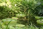 STOCK PHOTO big pond