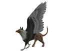 STOCK PNG gryphon