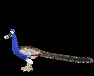 STOCK PNG peacock2 by MaureenOlder