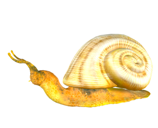 STOCK PNG snail2 by MaureenOlder