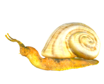 STOCK PNG snail2